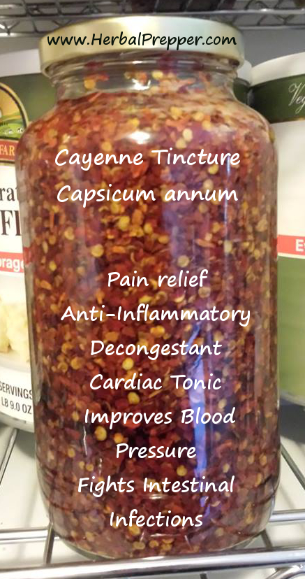 How to Make Cayenne Tincture - Herbal Prepper