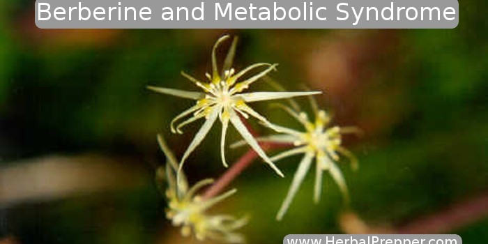 Berberine and Metabolic Syndrome