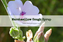 Marshmallow Cough Syrup