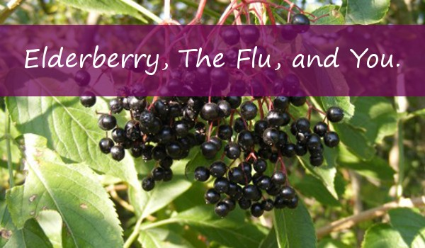 Elderberry, The Flu, and You!