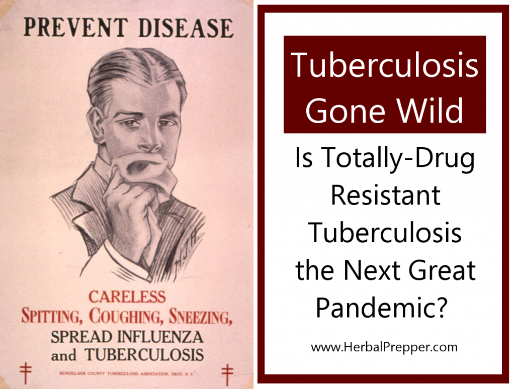 Tuberculosis Gone Wild   Is Totally Drug Resistant Tuberculosis the Next Great Pandemic?   Herbs for Tuberculosis   www.HerbalPrepper.com