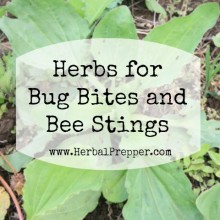 Herbs for Bug Bites and Bee Stings | Podcast | www.HerbalPrepper.com