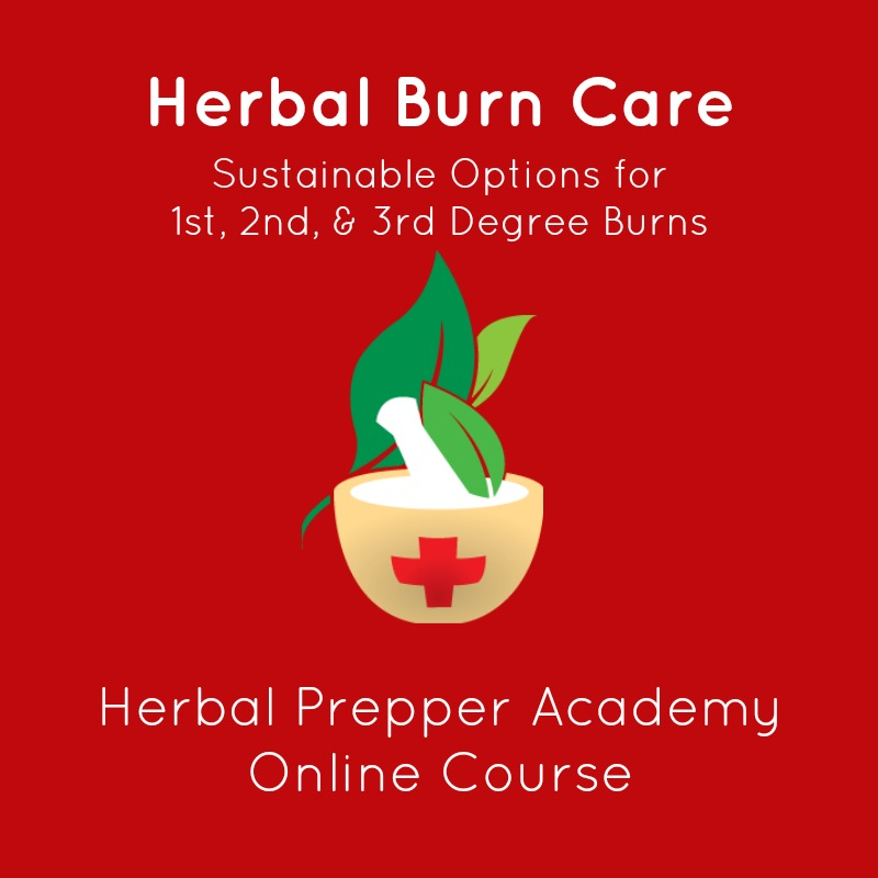 Herbal Burn Care | Herbal Prepper Academy | Online Course | Learn Herbs Online | Cat Ellis | www.HerbalPrepper.com