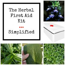 Herbal First Aid Kit Simplified | Herbal Prepper Live | Cat Ellis | Prepper Broadcasting Network | www.HerbalPrepper.com
