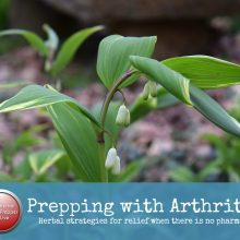 How to Prep with Arthritis | Herbalist Cat Ellis | Herbal Prepper Live | Prepper Broadcasting | www.HerbalPrepper.com