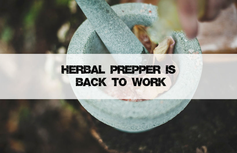 Herbal Prepper Is Back to Work